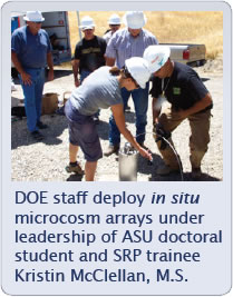 Image with caption picture of DOE staff deploy in situ microcosm arrays under leadership of ASU doctoral student and SRP trainee Kristin McClellan, M.S.