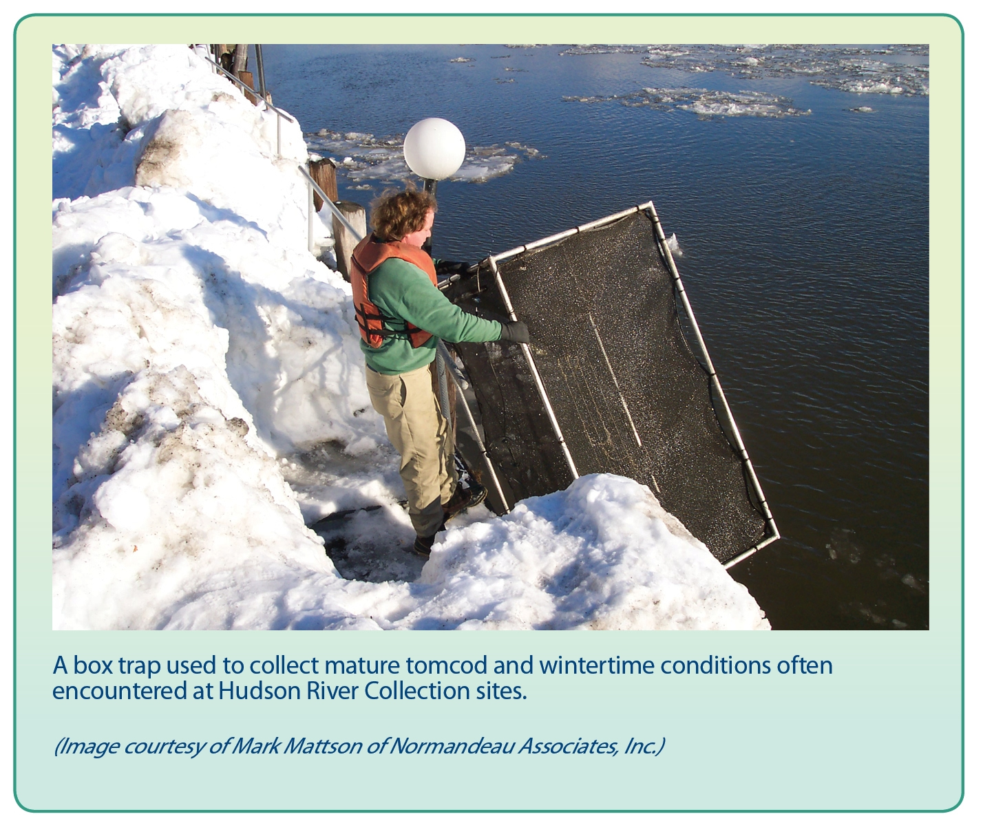 A box trap used to collect mature tomcod and wintertime conditions often encountered at Hudson River Collection sites.