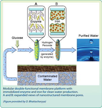 Modular double-functional membrane platform with immobilized enzyme and iron for clean water production.