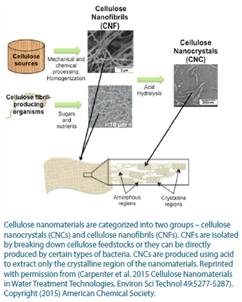 A photo of the two different groups of cellulose nanomaterials.