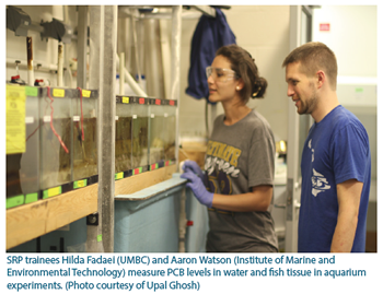 SRP trainees Hilda Fadaei (UMBC) and Aaron Watson (Institute of Marine and Environmental Technology) measure PCB levels in water and fish tissue in aquarium experiments. (Photo courtesy of Upal Ghosh).