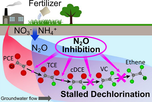 Researchers tested whether N2O inhibits reductive chlorination at different steps in the process.