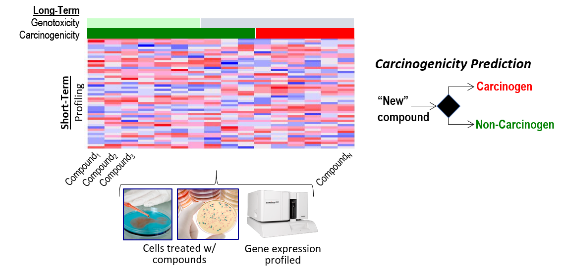 Simplified graphic illustrating how many different compounds can be tested in cells to collect gene expression profiles in a short amount of time.