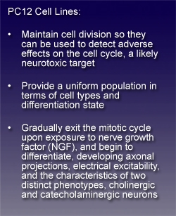 text box stating: PC12 Cell Lines: Maintain cell division so they can be used to detect adverse effects on the cell cycle, a likely neruotoxic target; Provide a uniform population in terms of cell types and differentiation state; Gradually exit the mitotic cycle upon exposure to nerve growth factor (NGF), and begin to differentiate, developing axonal projections, electrical excitability, and the characteristics of two distinct phenotypes, cholinergic and catecholaminergic neurons.