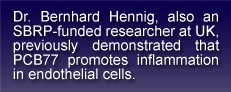 Text Reads: Dr. Bernhard Hennig, also an SBRP-funded researcher at UK, previously demonstrated that PCB77 promotes inflammation in endothelial cells.