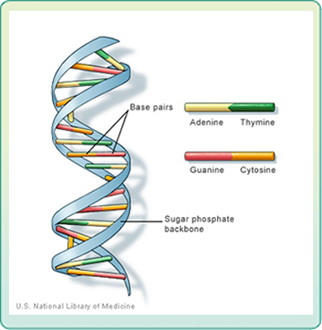 Image of DNA strand.