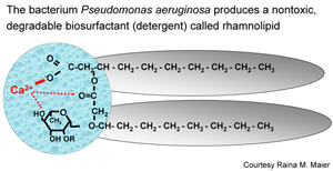 pseudomonas graphic.